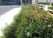 Hedging Kildare, Tom McIntyre Landscaping & Nursery