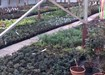 Greenshoots Nurseries