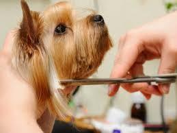 dog grooming mullingar