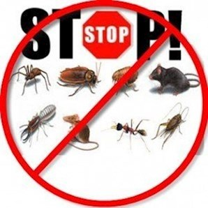 Emergency Pest control Limerick
