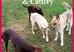 Dog Boarding Kennels Kildare, Roseberry Boarding Kennels and Cattery.