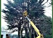 Tree Surgeons Maynooth, Celbridge. Healion Tree Care.