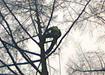 Tree Surgeons Monaghan